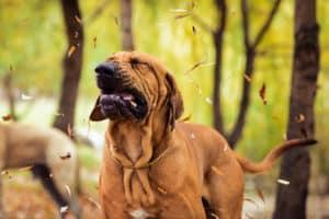 Hund niest