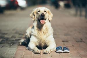 Hundeschuhe