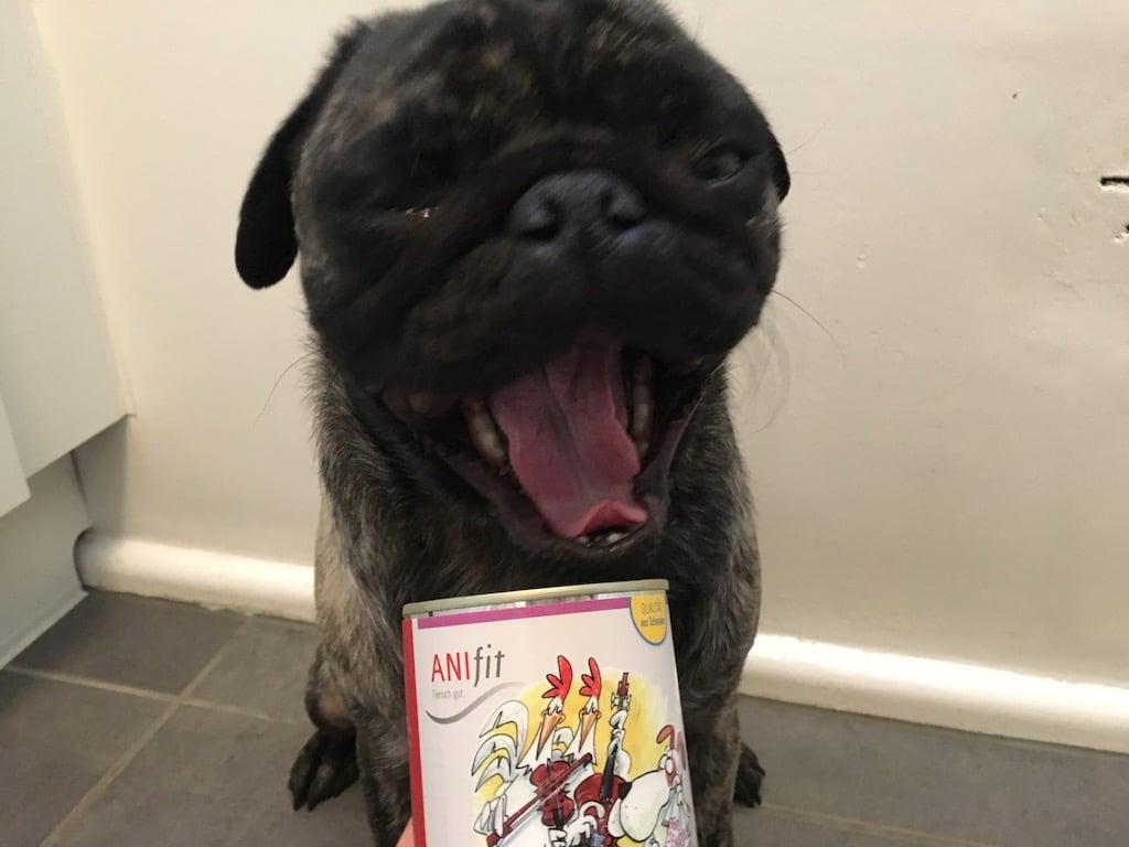 anifit hundefutter test