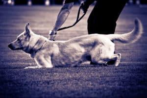 Schleppleinentraining Hund