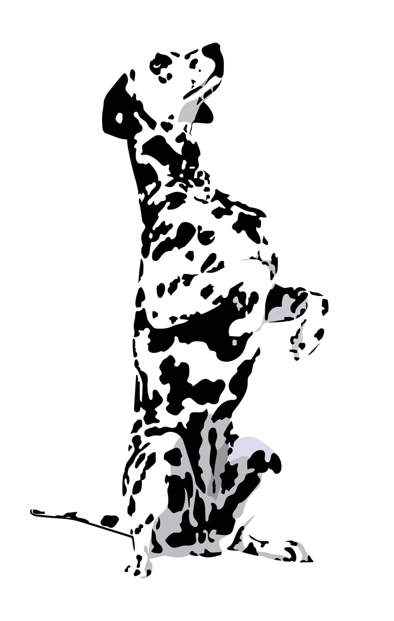 Dalmatiner Geschichte