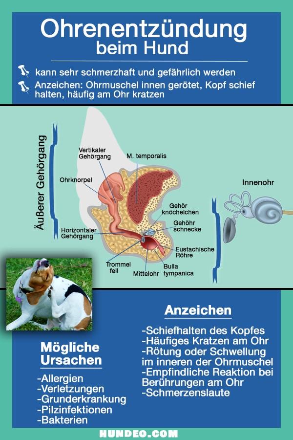 Grafik Ohrenentzündung beim Hund