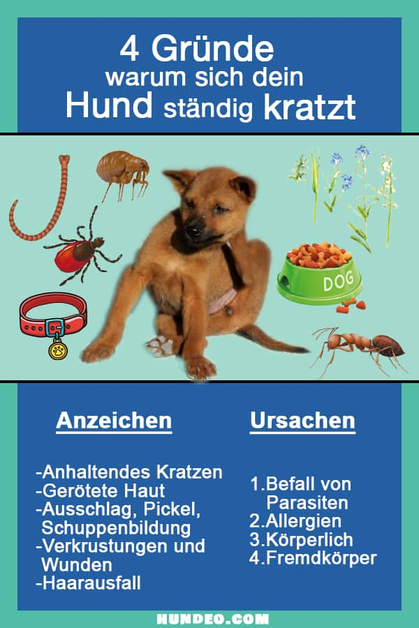 Grafik Warum Hund kratzt