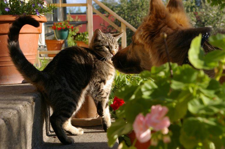 Hund und Katze 1