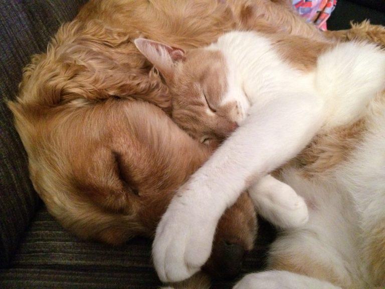 Hund und Katze 2