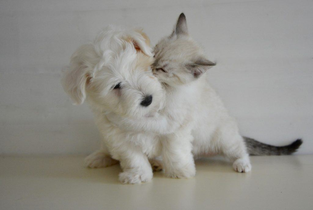 Hund und Katze 3