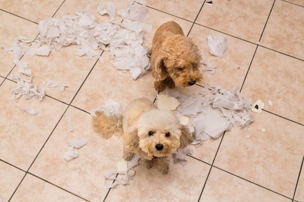 Hund zerstört