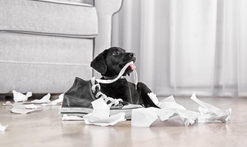 Hundehaftpflichtversicherungen