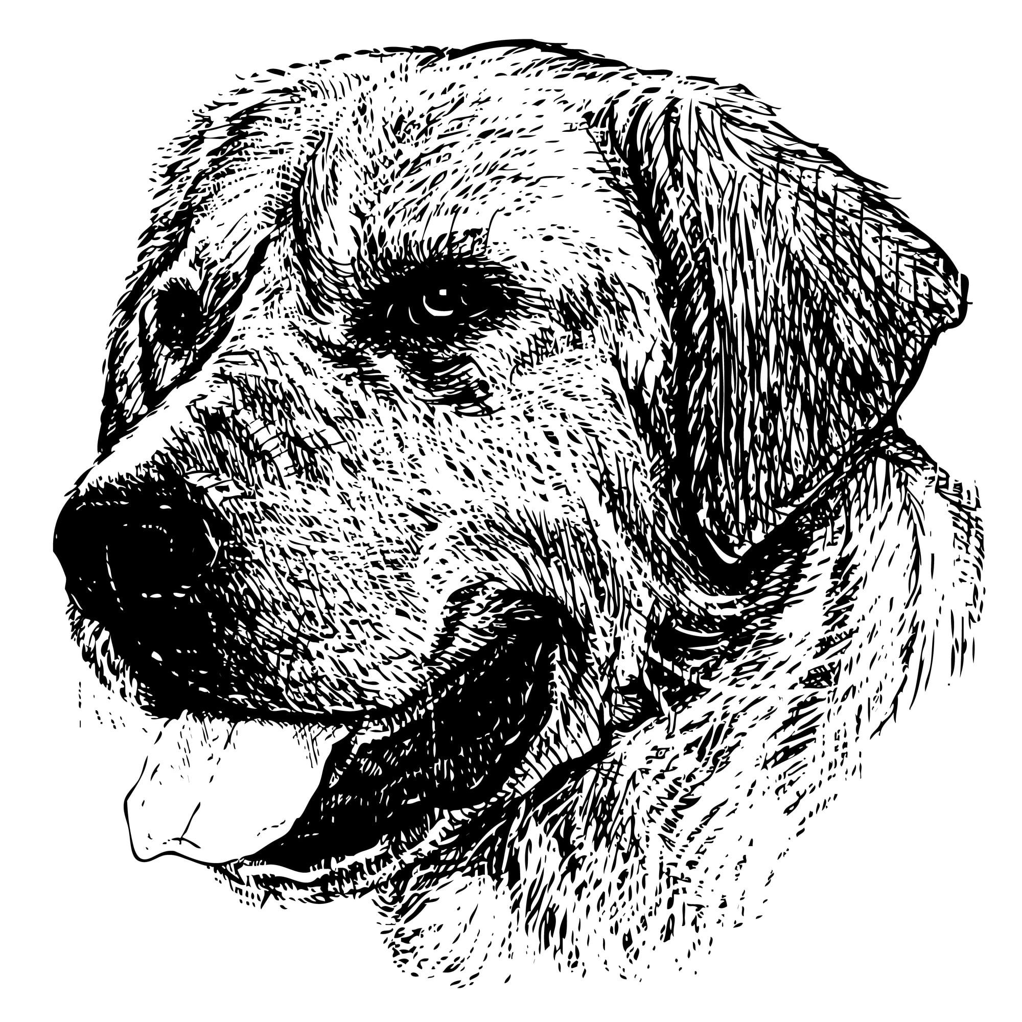 Labrador Retriever Geschichte