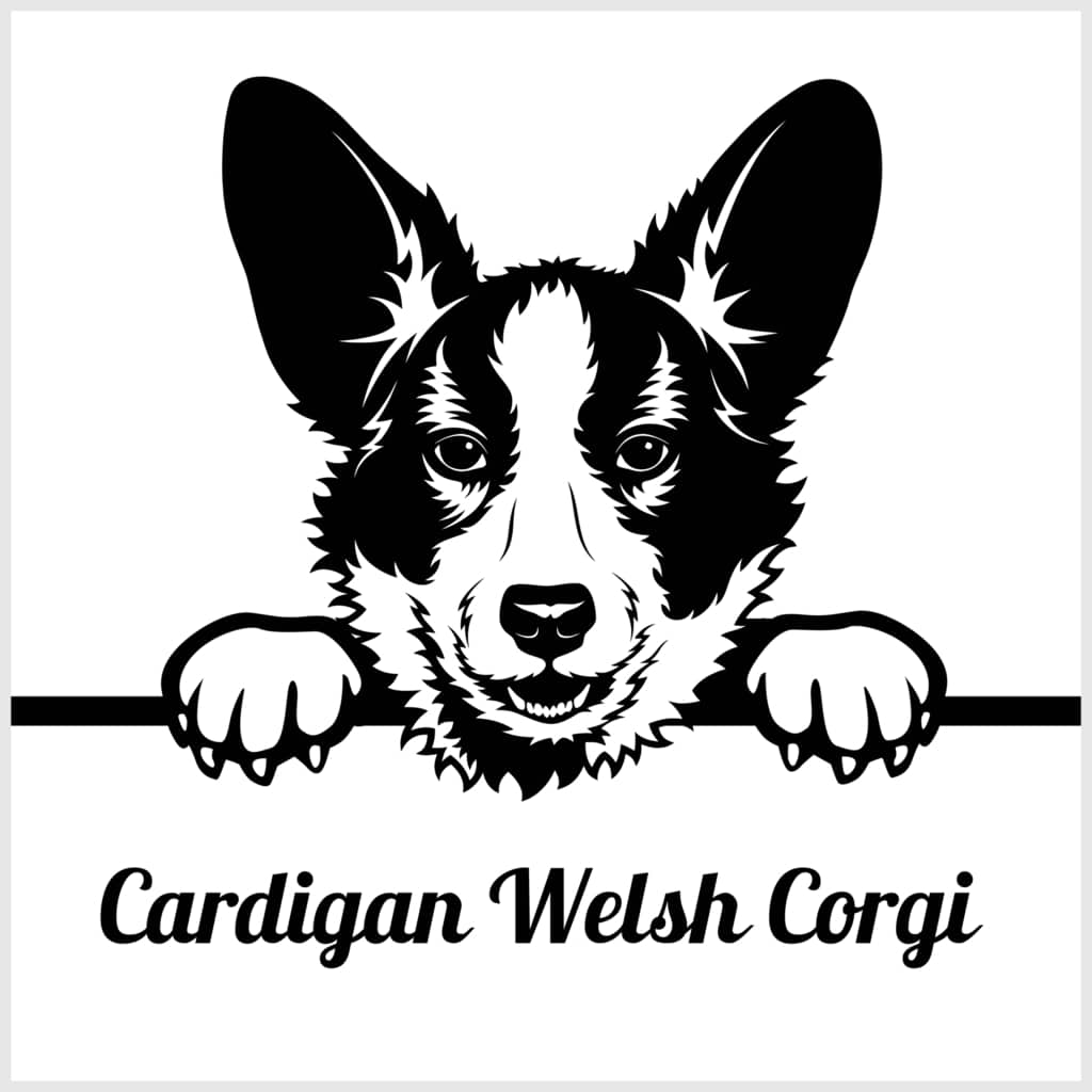 Welsh Corgi Cardigan Geschichte