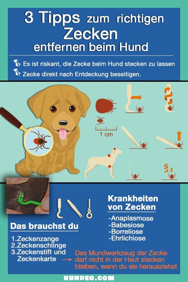 Zecken entfernen Hund