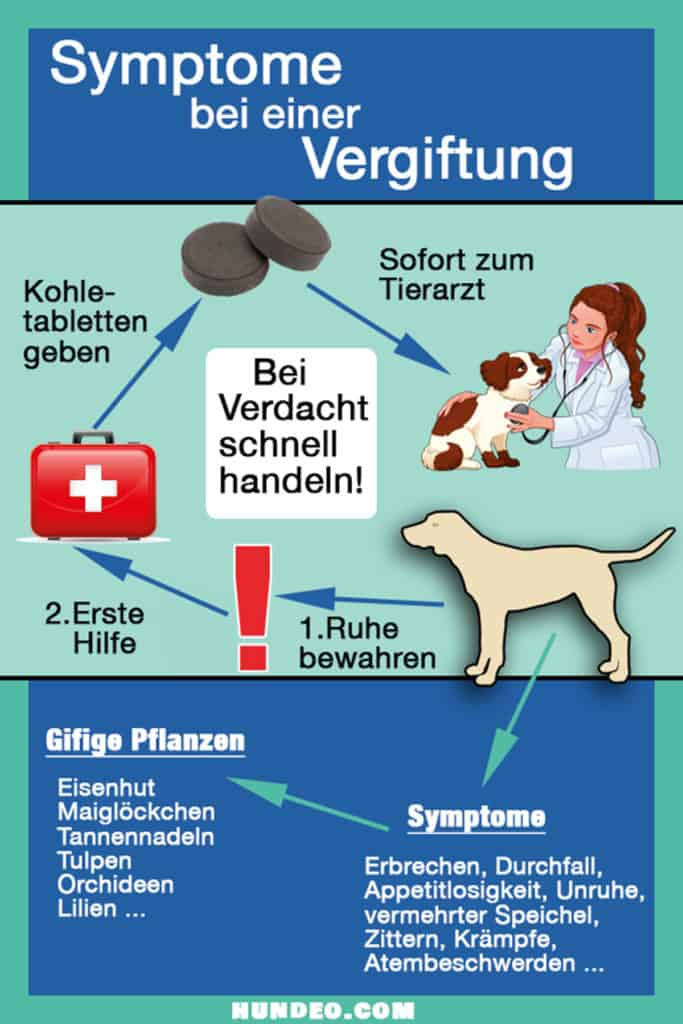 Symptome Hund Vergiftung