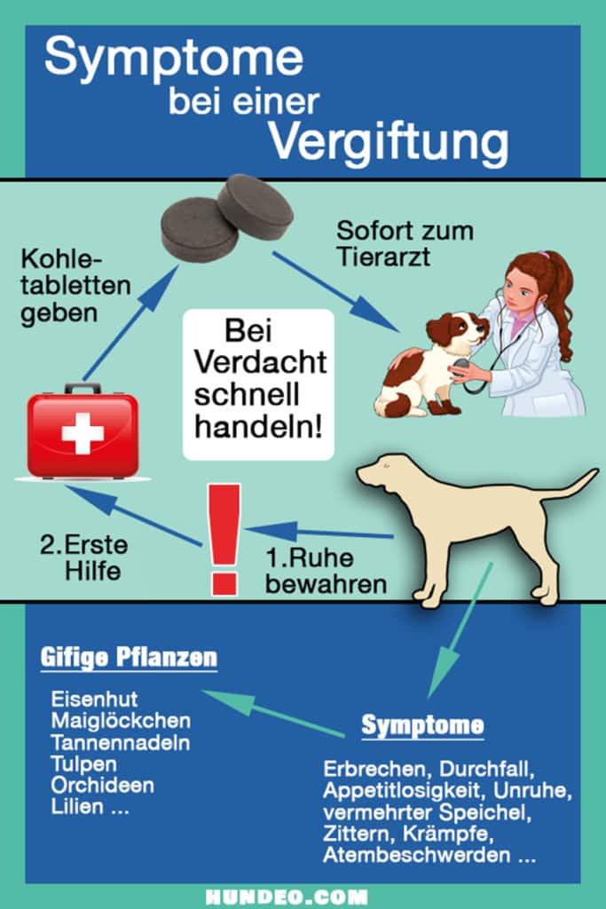 Grafik Symptome Vergiftung