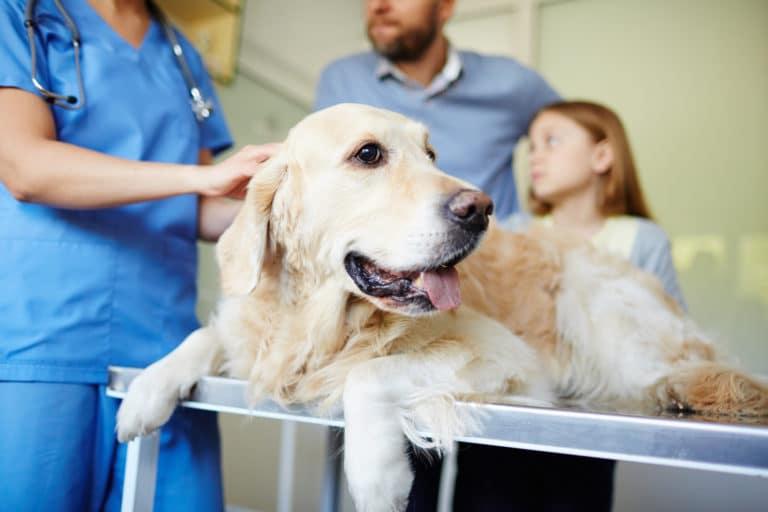 Hund Tierarzt Behandlung