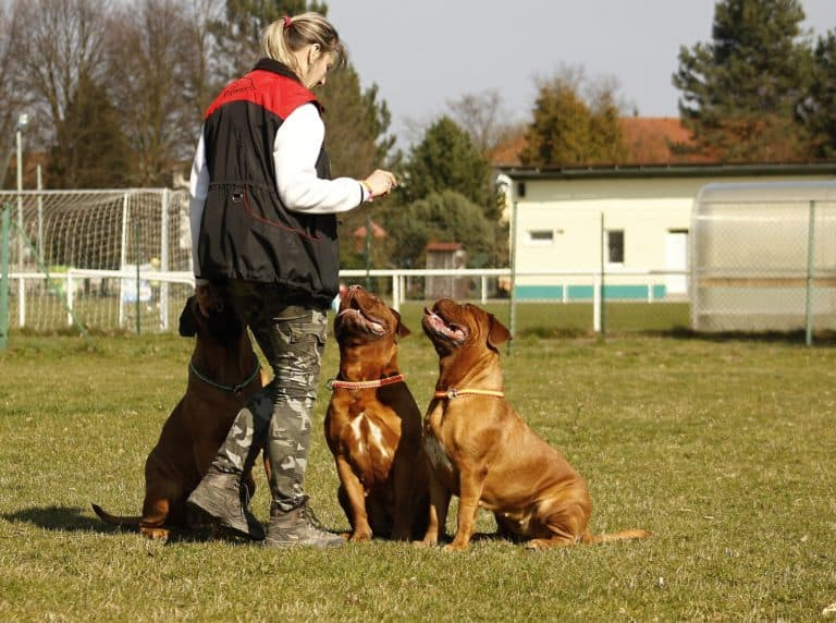 Hundeführer 1