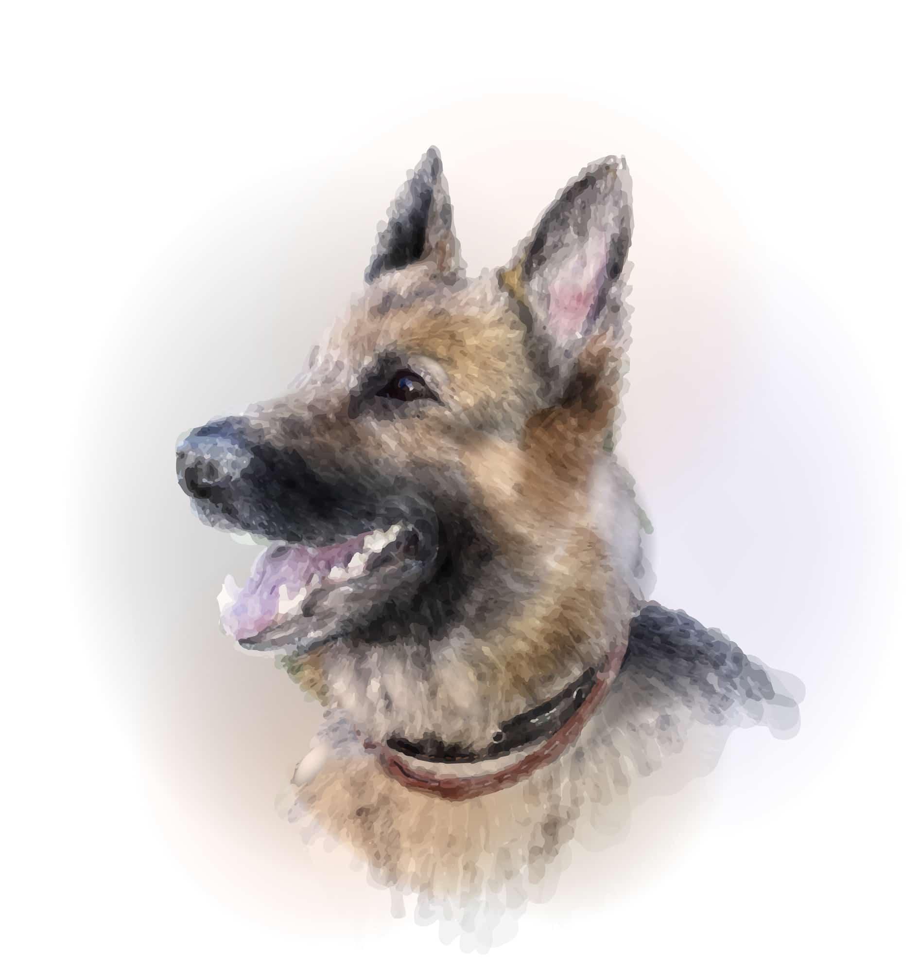 Deutscher Schäferhund Geschichte