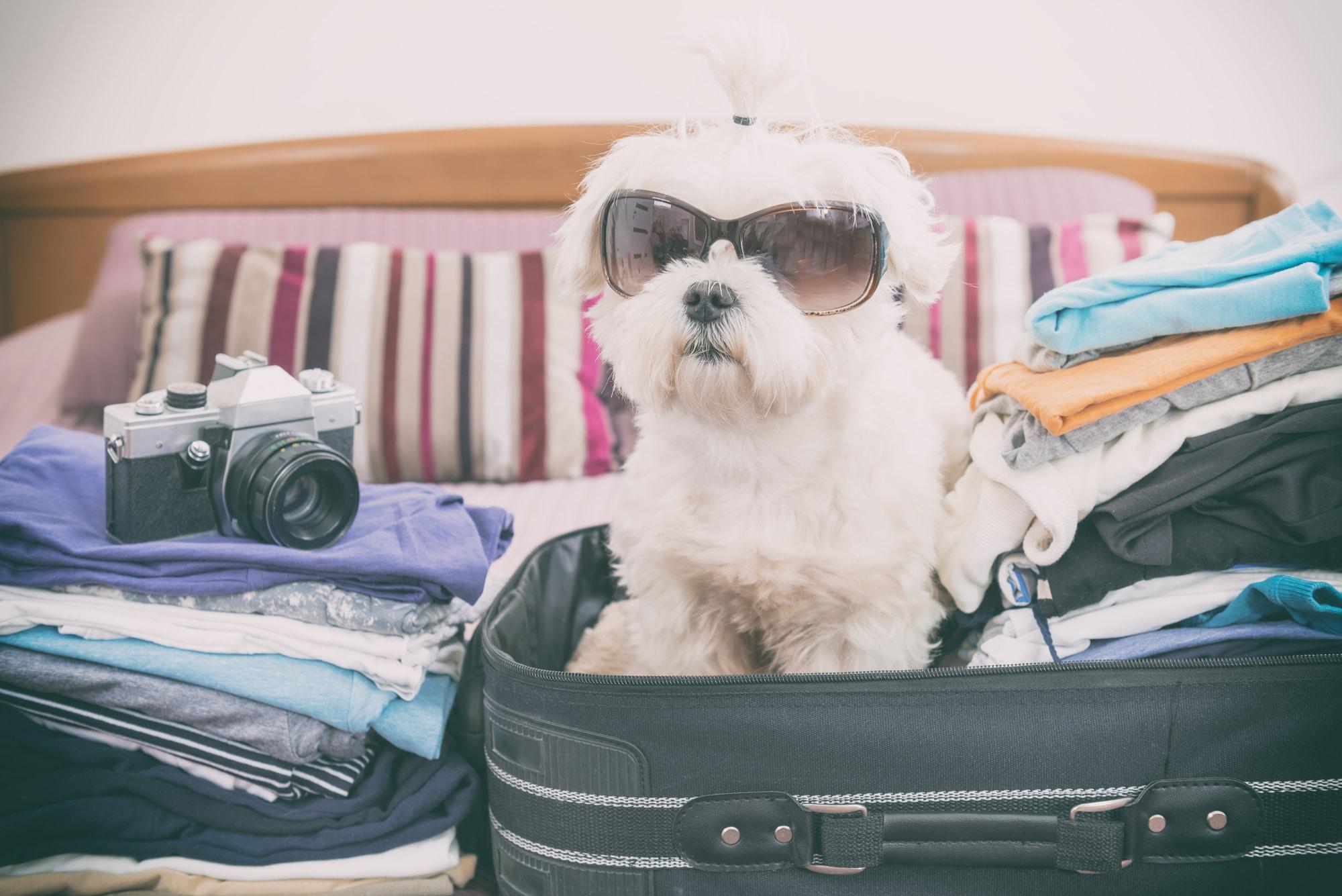 Hundeurlaub Tipps
