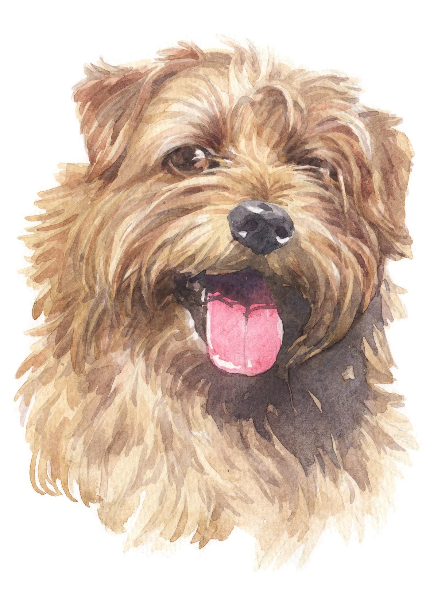 Norfolk Terrier Geschichte