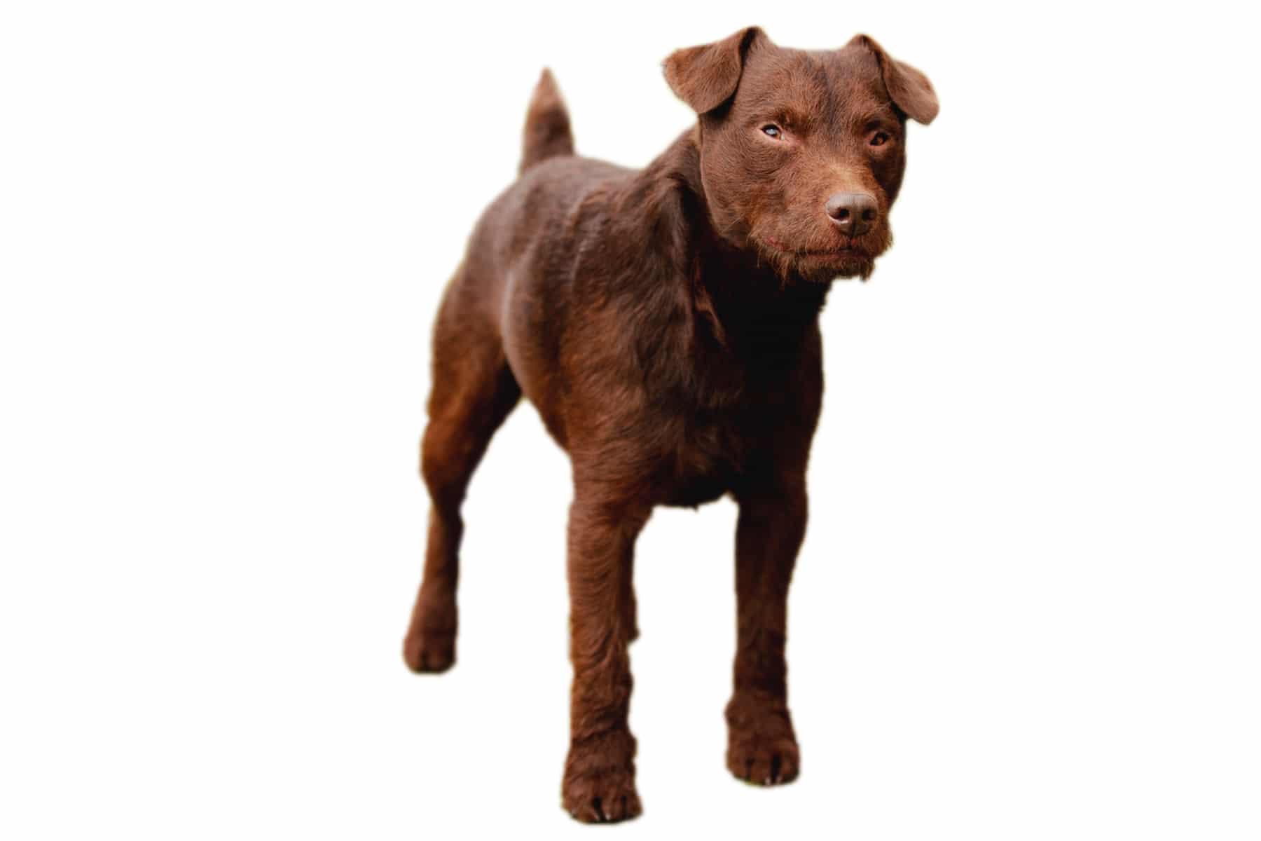Patterdale Terrier Profilbild