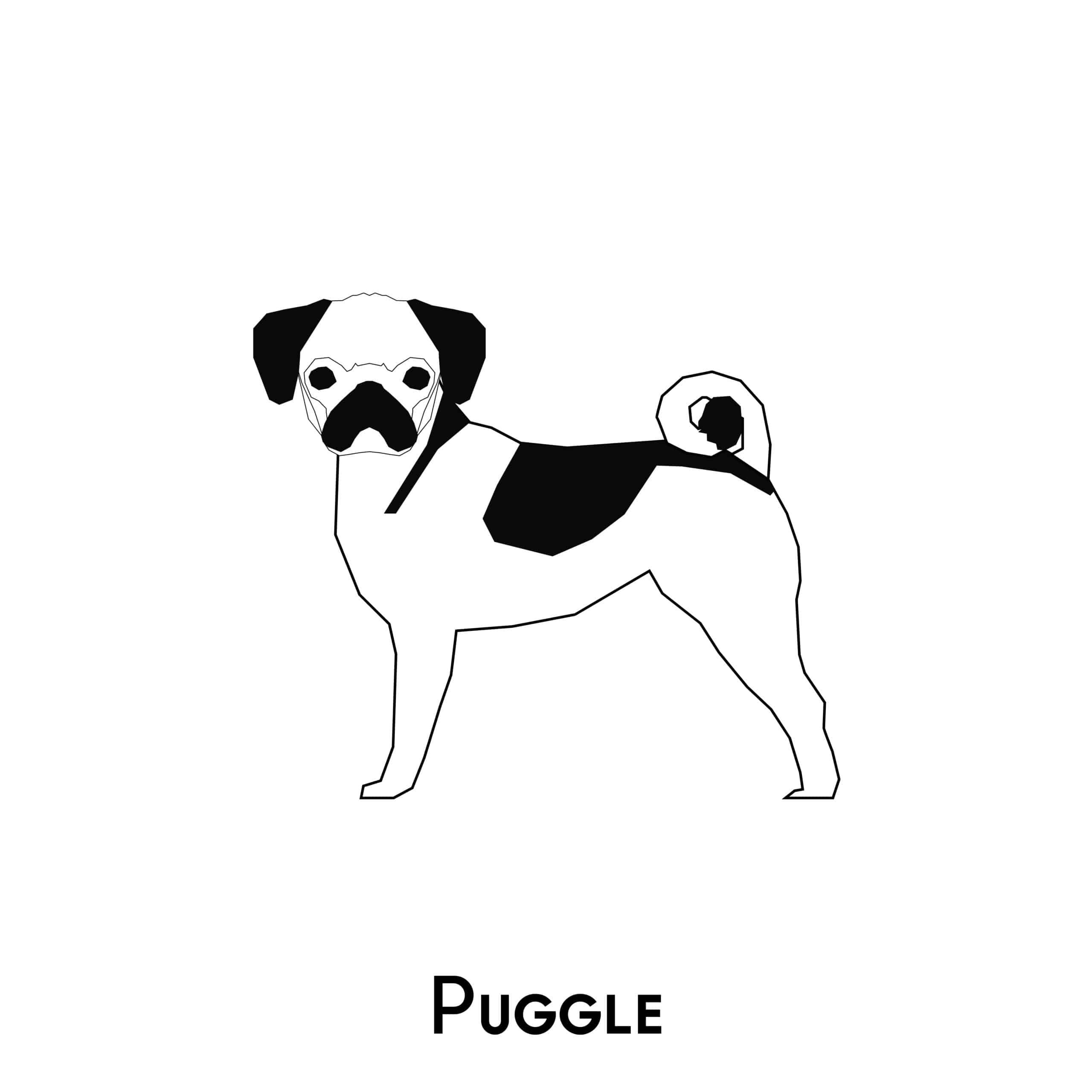 Puggle Geschichte