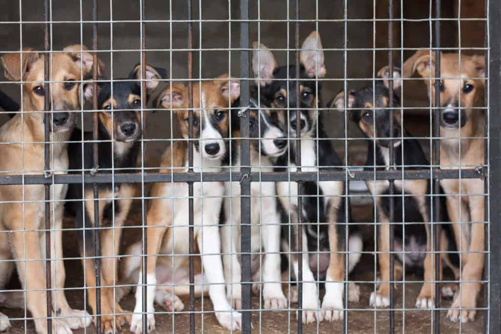 Darum ist es sinnvoll, ein Hund aus dem Tierheim zu adoptieren (Mit Checkliste, was du beachten solltest) 3