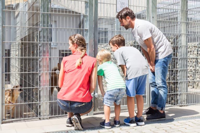 Darum ist es sinnvoll, ein Hund aus dem Tierheim zu adoptieren (Mit Checkliste, was du beachten solltest) 1