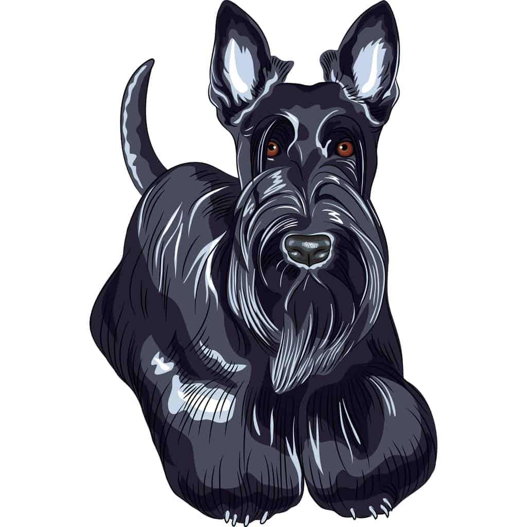 Scottish Terrier Geschichte