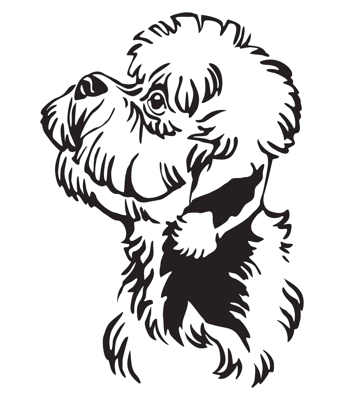 Dandie Dinmont Terrier Geschichte