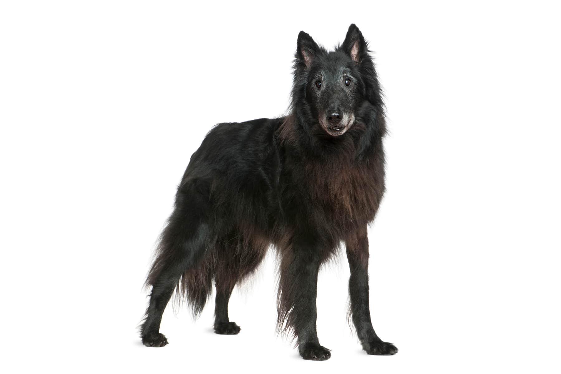 Grönlandhund Profilbild