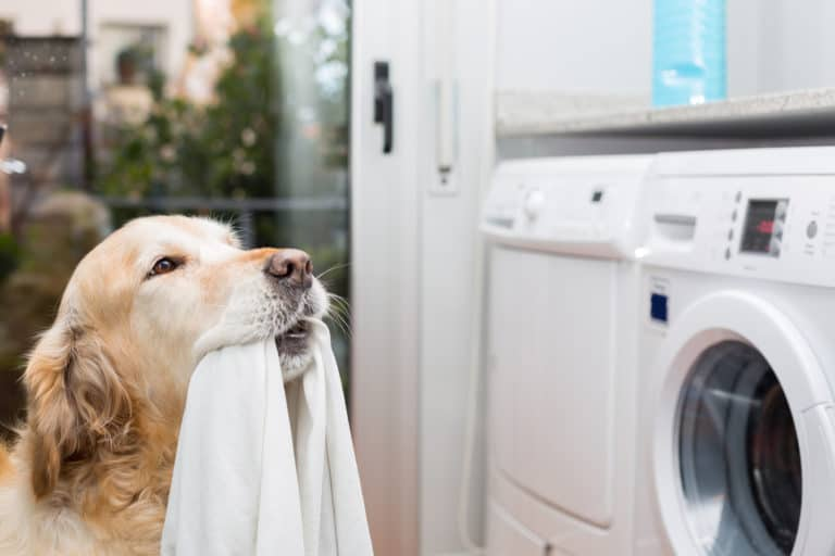 Hundehaare entfernen? (Mit diesen 10 Tipps gehts leichter) 3