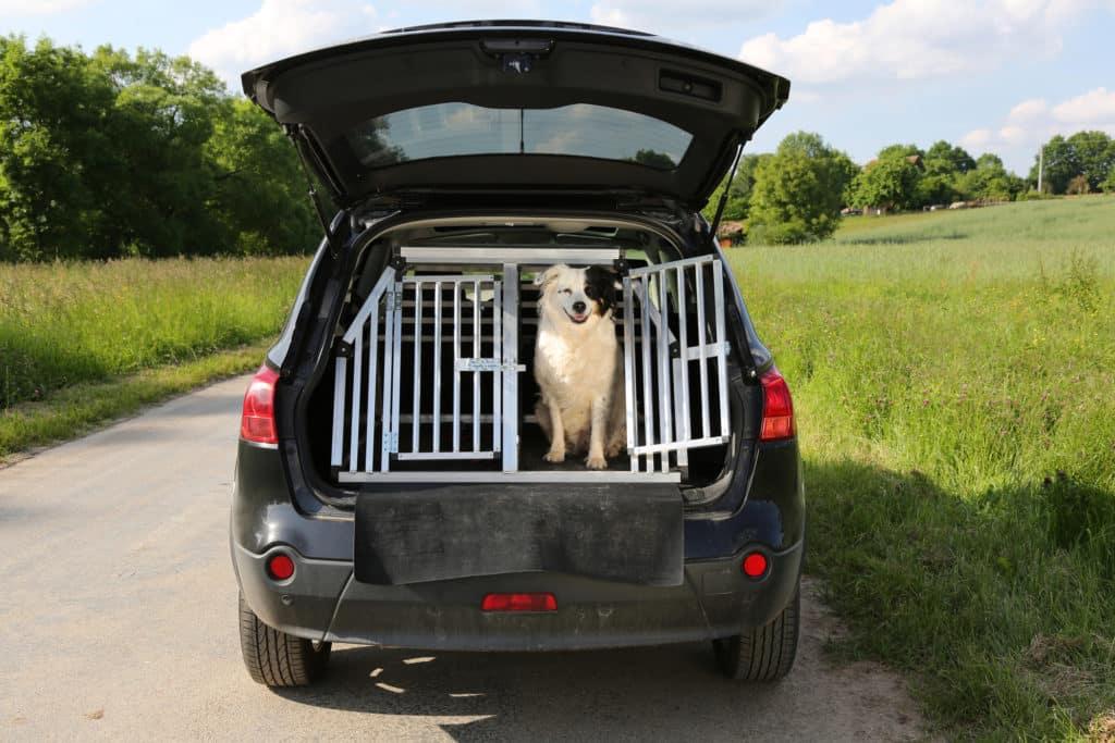 Hund im Auto transportieren? (Das musst du wissen) 2