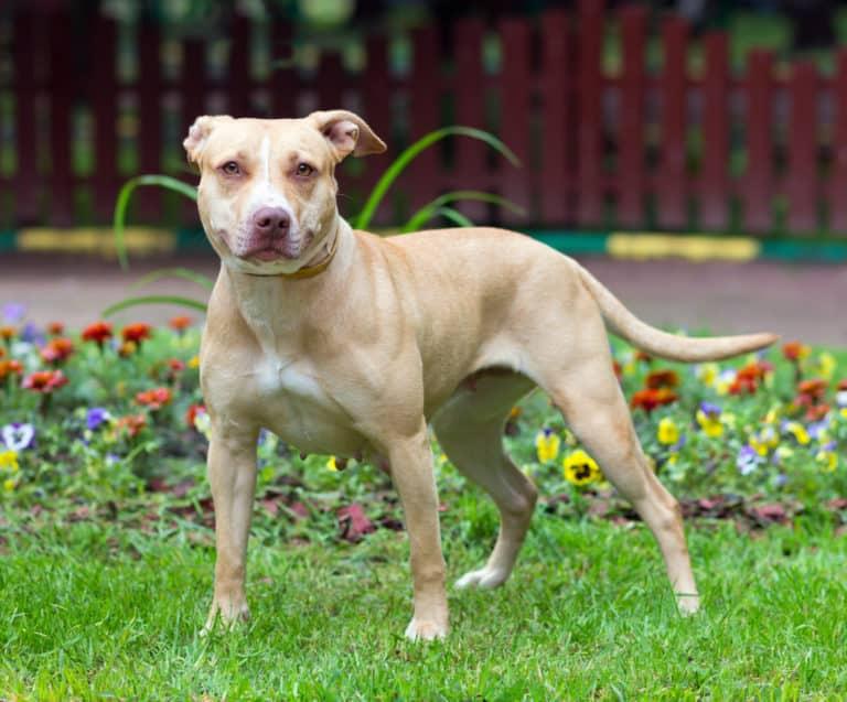 Beißkraft Rangliste (Diese 10 Hunde haben das stärkste Gebiss) 2