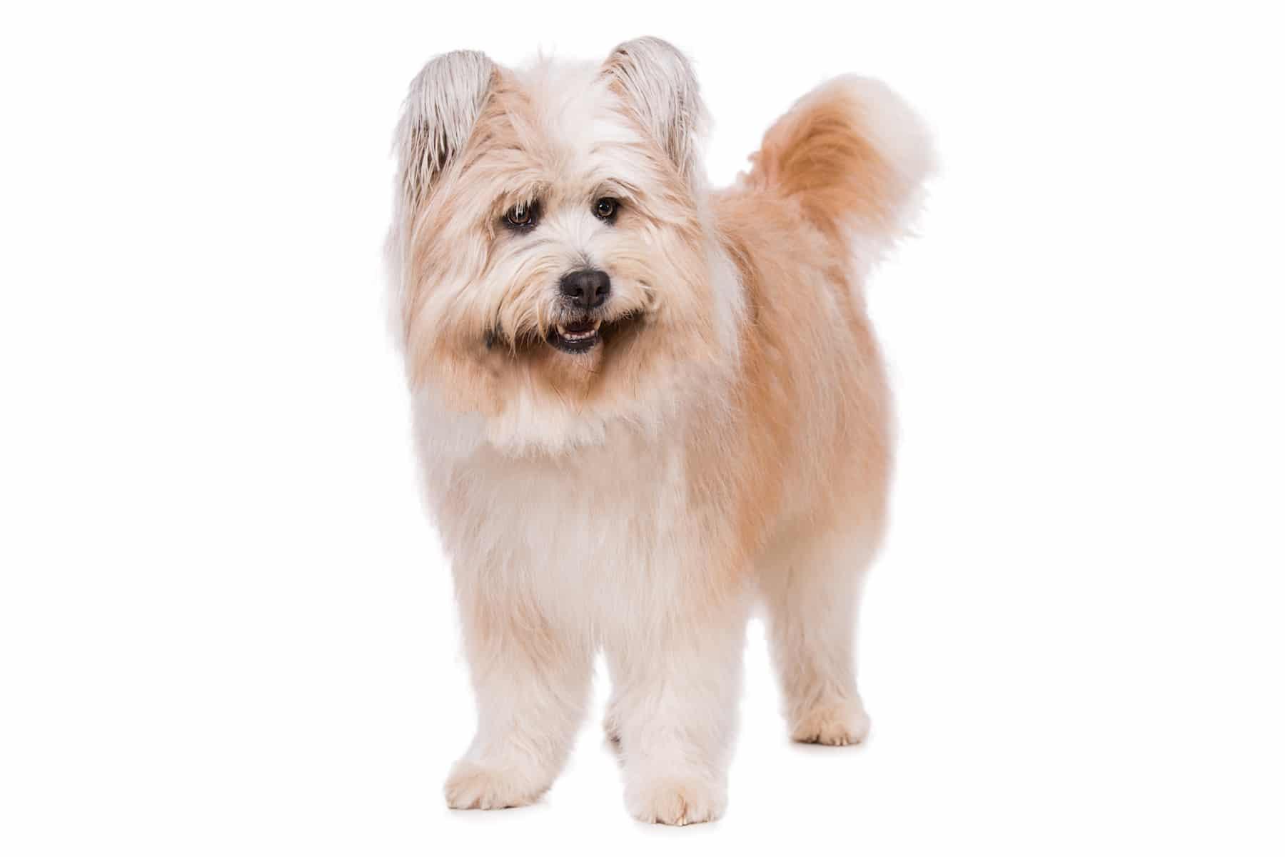 Elo Hund Profilbild