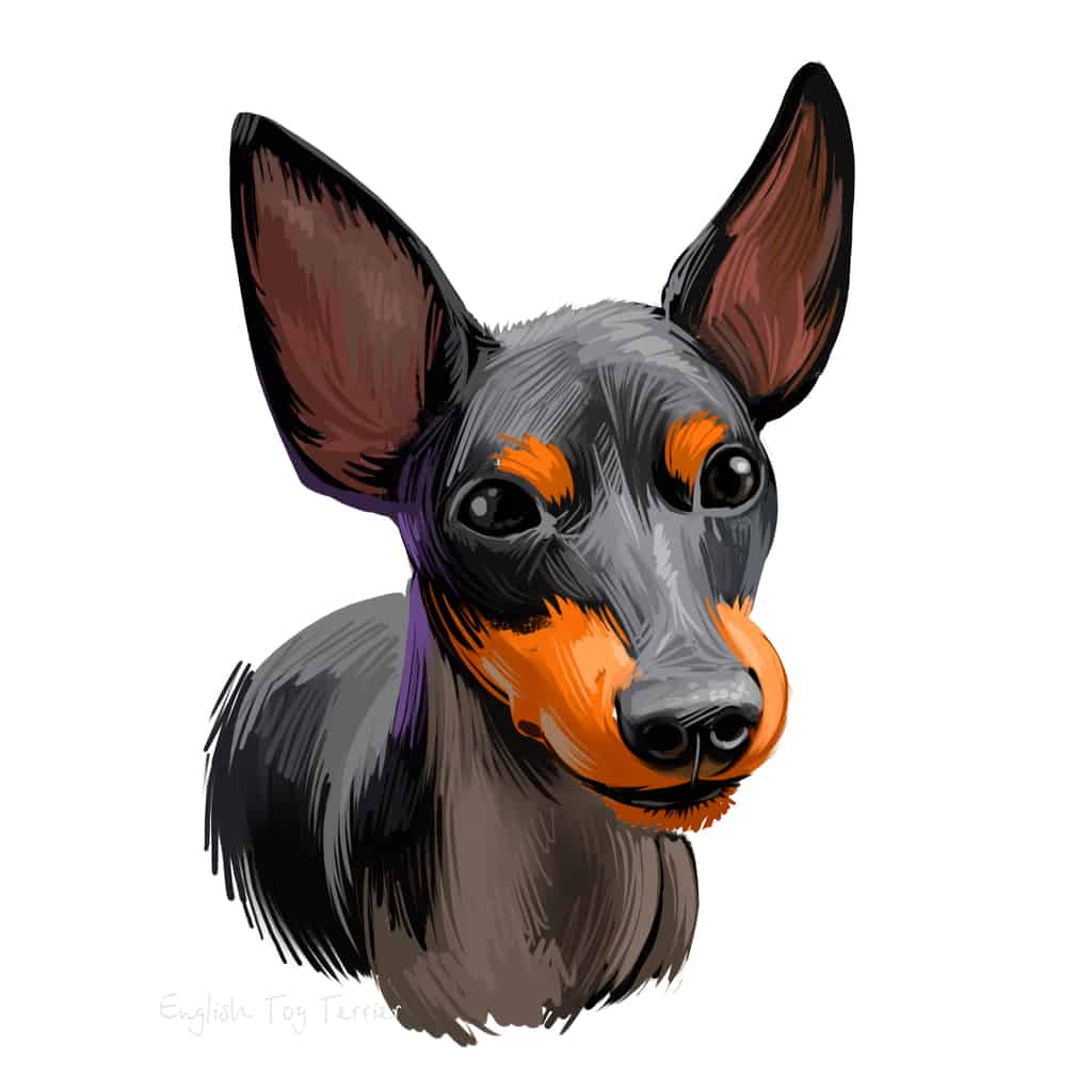 English Toy Terrier Geschichte