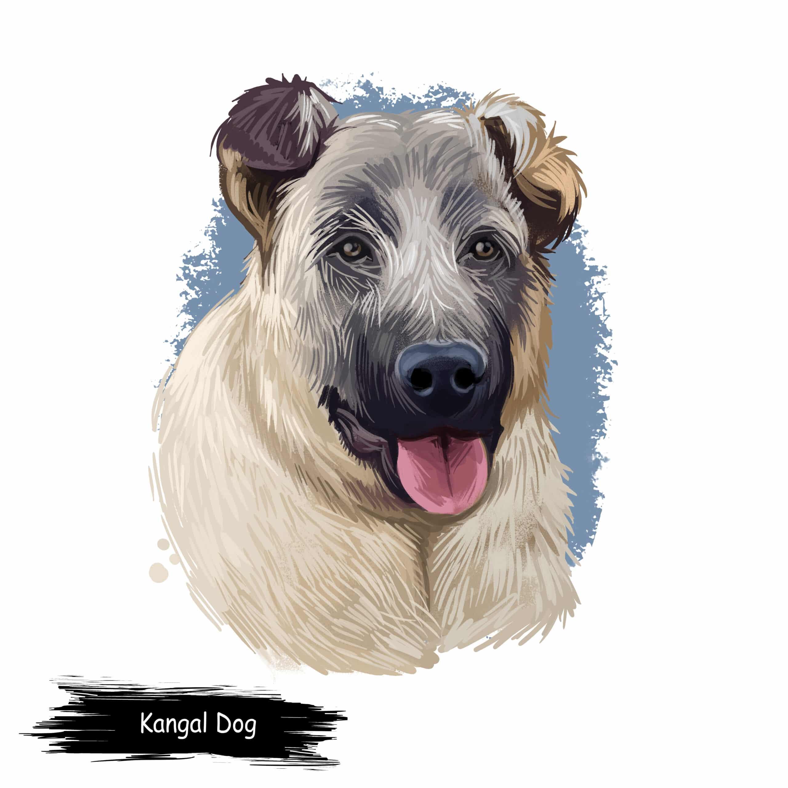 Kangal Geschichte