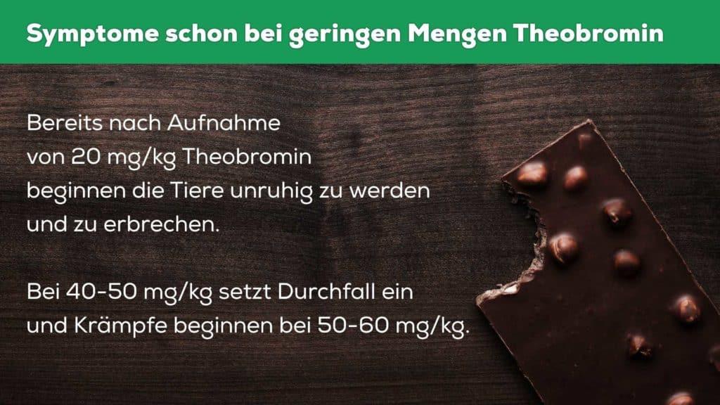 symptome schokoladenvergiftung