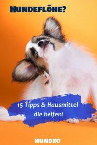 15 Hausmittel gegen Hundeflöhe