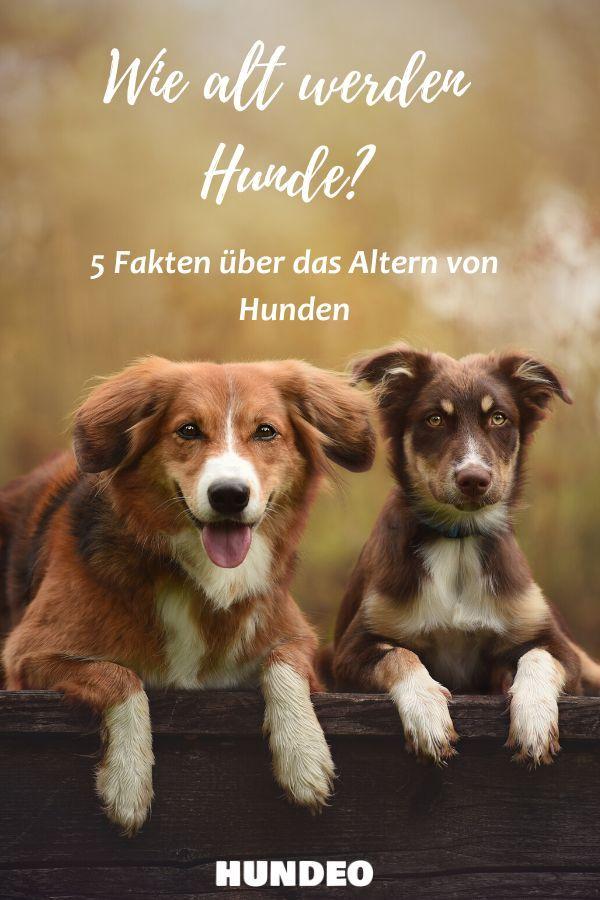 Wie alt werden Hunde_ 5 Fakten über das das Altern bei Hunden