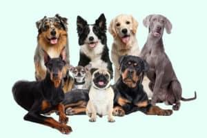 Beliebte Hunde neu