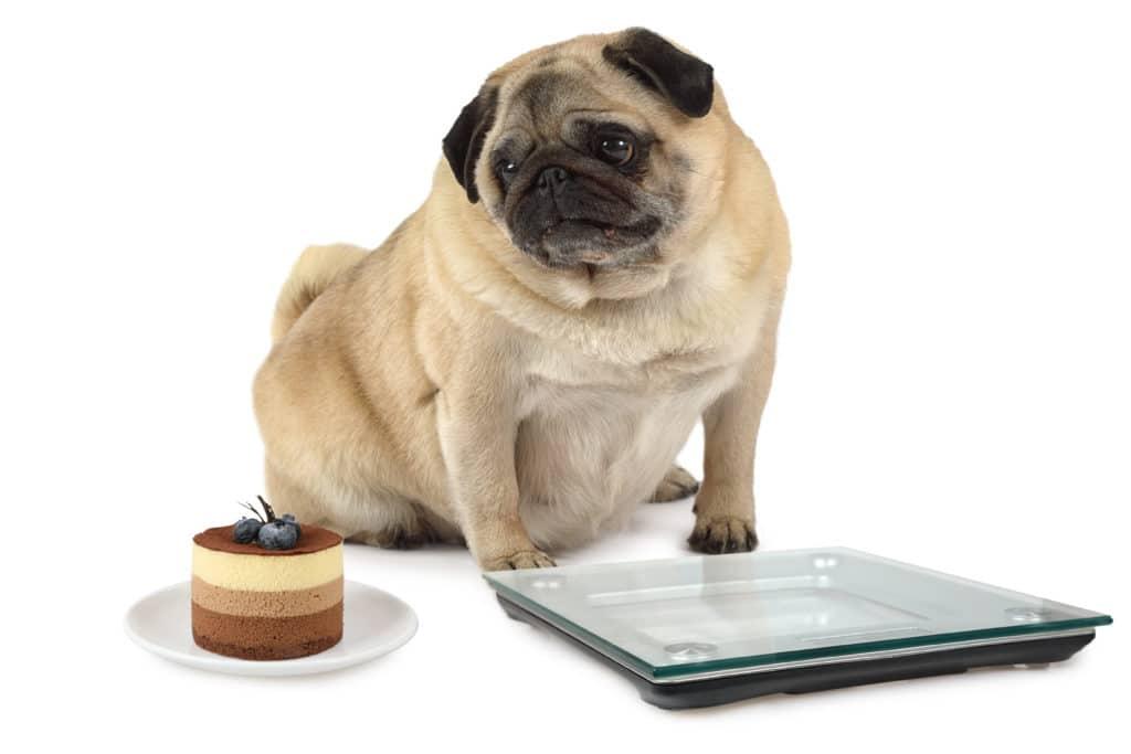 Wie du die richtige Futtermenge beim Hund berechnest 1