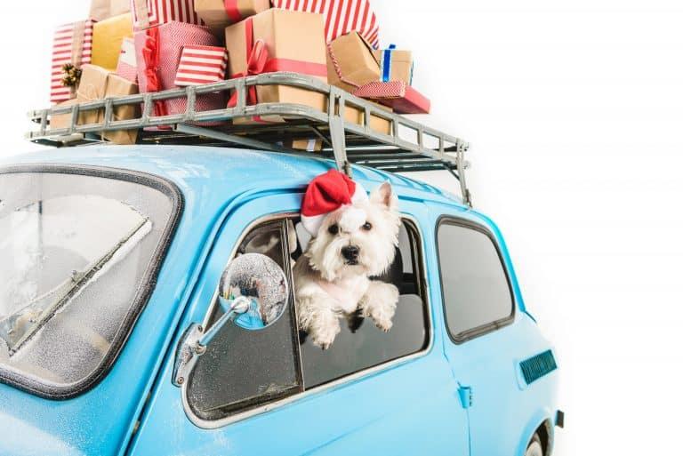 Hund Silvester Urlaub