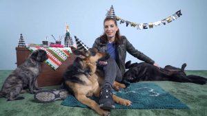 7 Tipps für ein entspanntes Silvester mit deinem Hund
