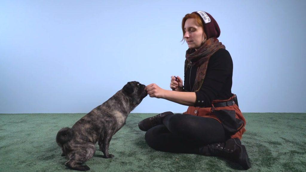Was ist Clickertraining_ (Vorteile, Übungen und Tipps für deinen Hund) 2-42