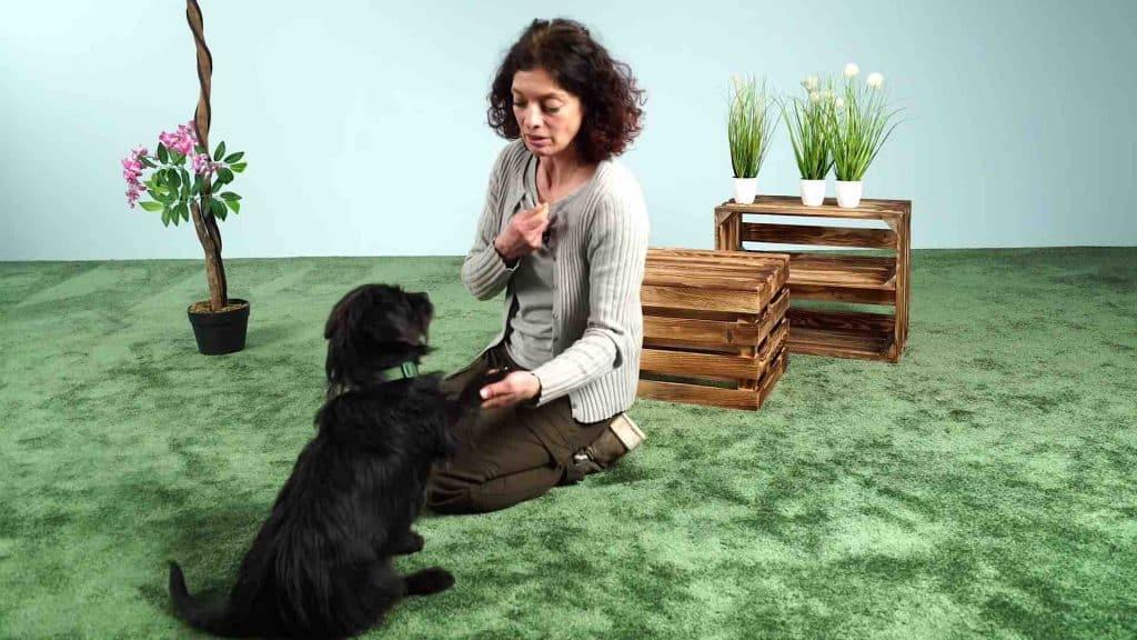 Hund Pfötchen geben beibringen (Die 3 Schritte Anleitung)