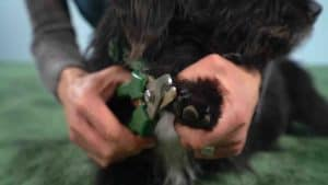 Krallenschneiden beim Hund (So geht es ganz einfach)