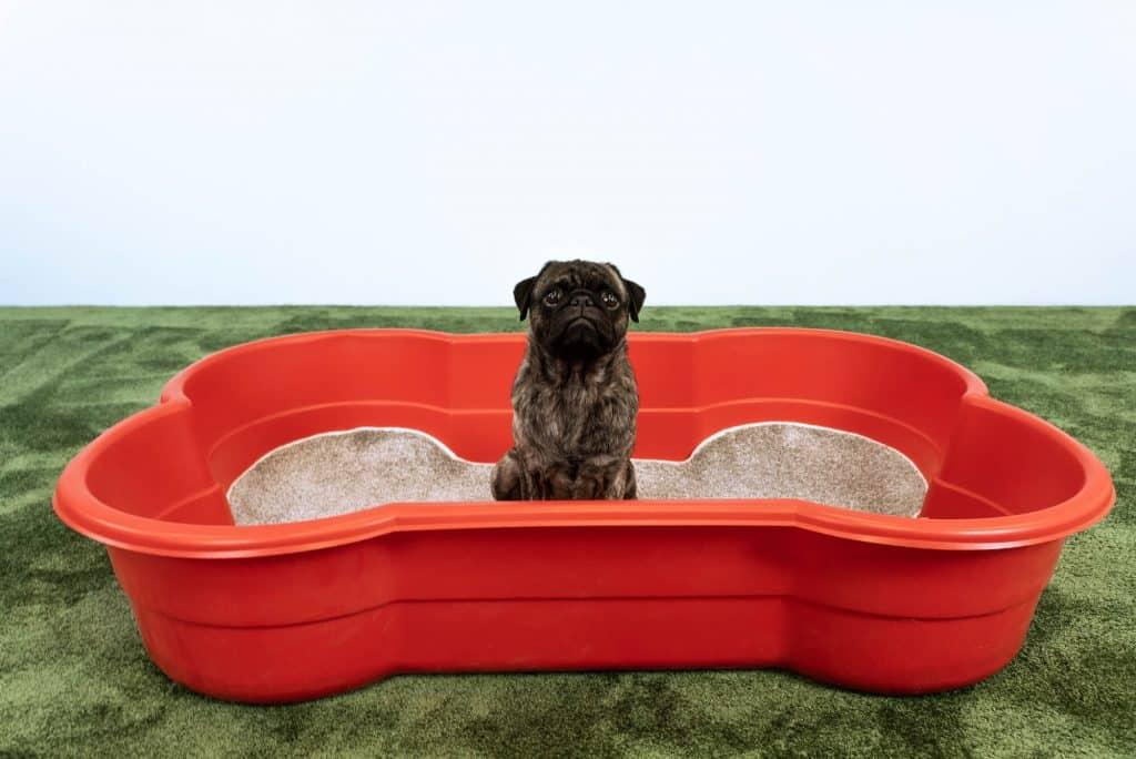 dogslandhundepool 1910