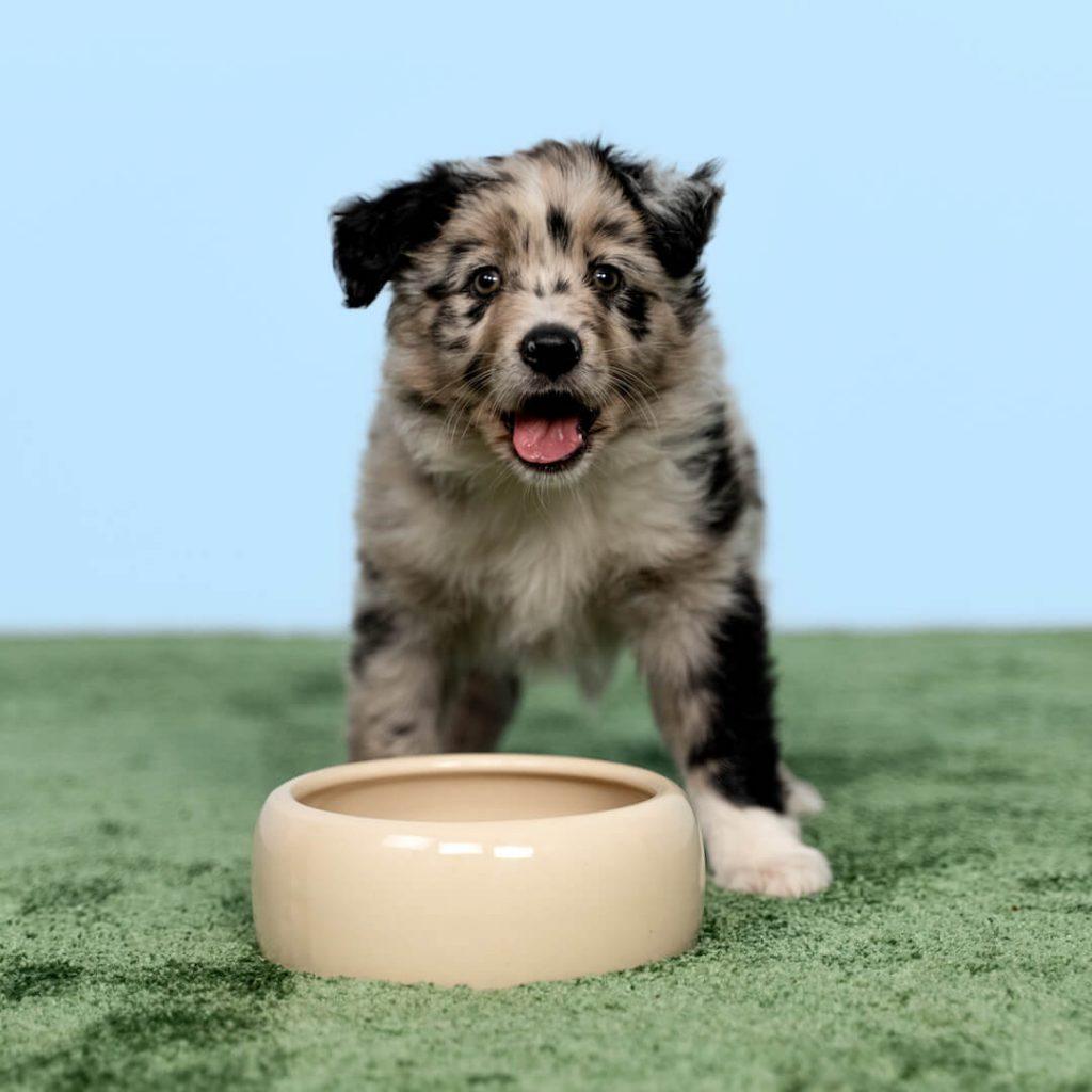 hundeo welpenfutter test 1