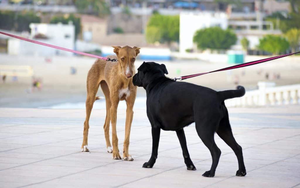 Hundebegegnung trainieren